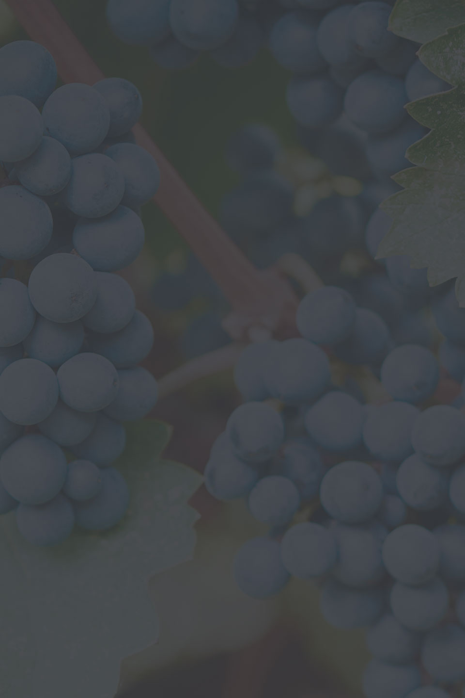 Preload Vineyards image