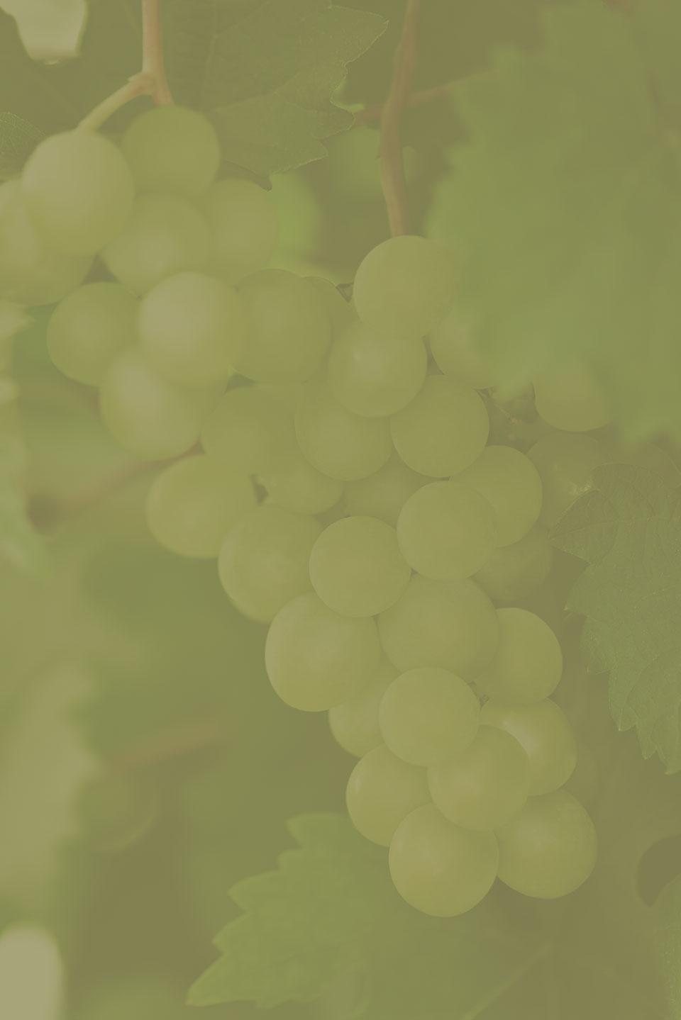 Preload Vineyards image